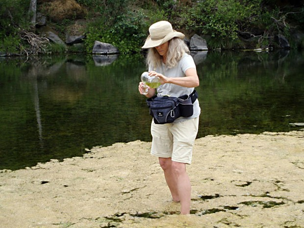 Humboldt County Environmental Health Division Water   Program Coordinator Harriet Hill collects samples from the site of a   recent dog death on the South Fork Eel River near Phillipsville. Phot submitted by Humboldt County Environmental Health Division.
