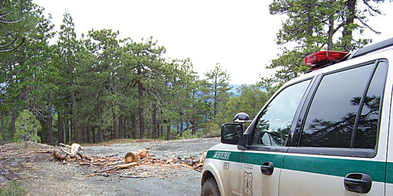 Tree Cop Illegal wood cutting is rampant on the Six Rivers National Forest. Many get away with it. But if Bobby Phillips catches someone cutting wood without a permit, he's apt to make him unload the wood on the spot, and of course cite him. Photo by Heidi Walters