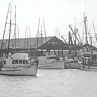 Lazio's Last Stand In 1940, Tom Lazio founded the Tom Lazio Fish Company on the Eureka waterfront. The family business was considered an Old Town staple and burnt down in the 1990s after Lawrence Lazio sold it. Photo courtesy of Humboldt County Collection, HSU Library.