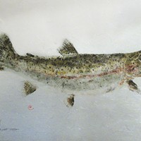 By the Breach In 1985, Ron Warner, a state fisheries biologist, made this fish print of a coastal cutthroat trout caught by Dan Doble. At 21 inches and five pounds, the fish set a new state record at the time. Photo by Heidi Walters