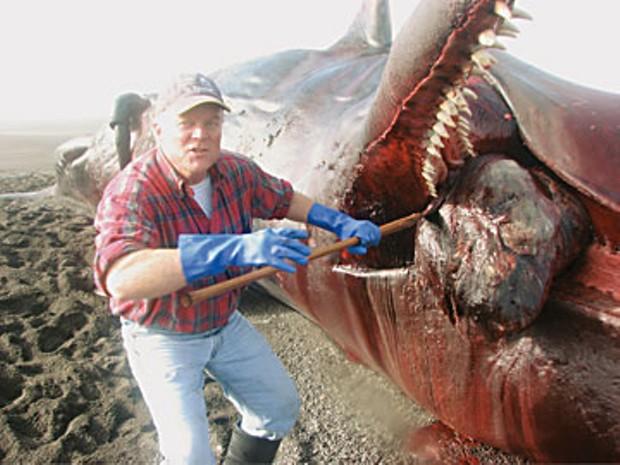 Jeff Jacobsen carves the stranded sperm whale on petrolia's mattole beach. Photo by Jenoa Briar-Bonpane