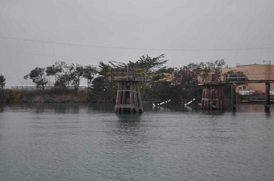 Egrets on the line near the Fox Farms plant. - GRANT SCOTT-GOFORTH