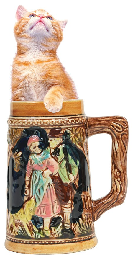 kitten in a stein. you're welcome.