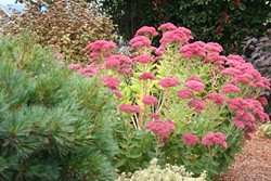 "Leave plants like sedum ""Autumn joy"" for birds."