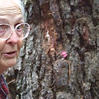 Save the Trees! Marian Perry next to a large tree that's been pink-dotted for possible removal in the Rohner Park Forest. Photo by Heidi Walters.