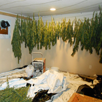 McKinleyville Weed Bust, Three Arrests
