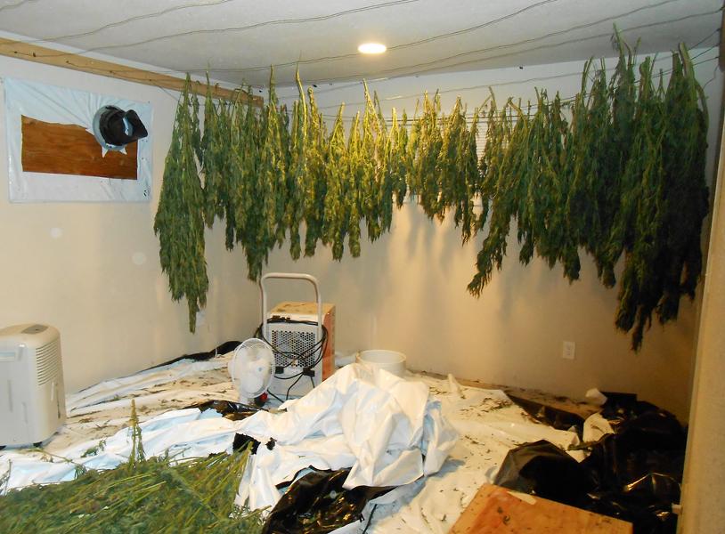 weed1.png
