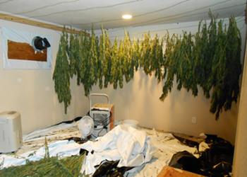 McKinleyville Weed Bust, Three Arrests