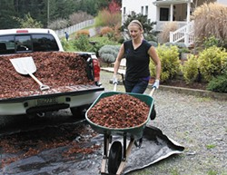 PHOTO COURTESY OF GENEVIEVE SCHMIDT. - Mulching with wood chips.