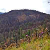 """Let It Burn"": Enviros Push for Return to Traditional Klamath Forest Management"