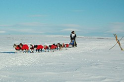 FLICKR USER RA64/WIKIMEDIA COMMONS - Norwegian Robert Sorlie near the Nome finish line in the 2007 Iditarod sled dog race. Several Iditarod competitors have sensed phantom companions during the lonely days on the trail.