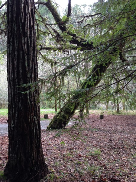 Grizzly Creek Redwoods State Park - PHOTO BY HEIDI WALTERS