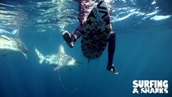 7740d573_surfing_sharks-press-shot-03.jpg