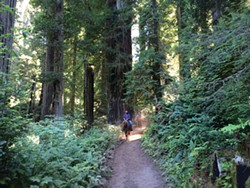 On the ghost tree ride in redwood national park.