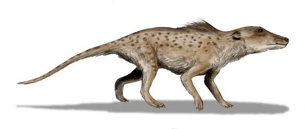 Pakicetus inachus, whale ancestor from the Early Eocene of Pakistan. - WIKIPEDIA/NOBU TAMURA