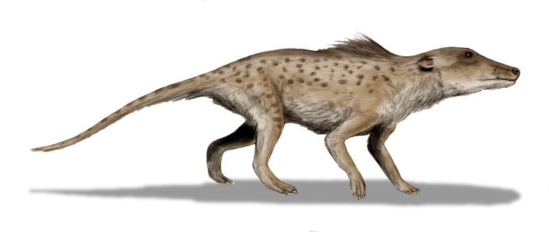 Pakicetus inachus, whale ancestor from the Early Eocene of Pakistan. - WIKIPEDIA/NOBU TAMURA