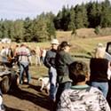 The Great Deer Roundup
