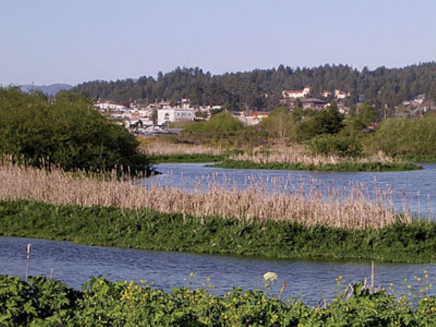 Arcata Marsh - PHOTO BY FLICKR USER JILL SIEGRIST/CREATIVE COMMONS LICENSE