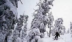 Wilderness Rx