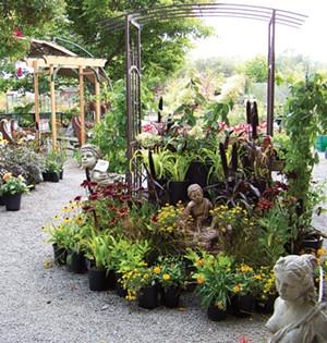 Pierson's Garden Center - PHOTO BY HEIDI WALTERS