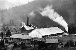 PHOTO COURTESY OF THE HUMBOLDT COUNTY HISTORICAL SOCIETY - PL's first planing mill 13 sprouts among a field of stumps in the late 1880s .
