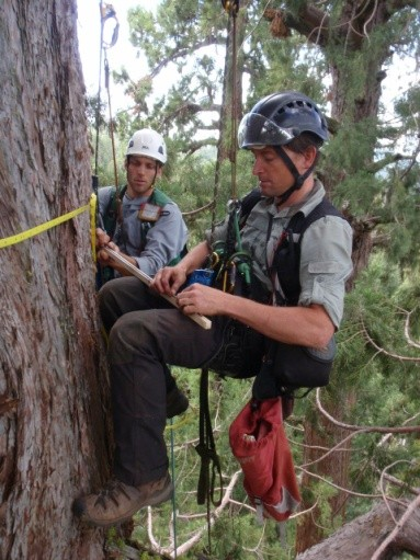 redwood_researchers_photo_courtesy_save_the_redwoods_league.jpg