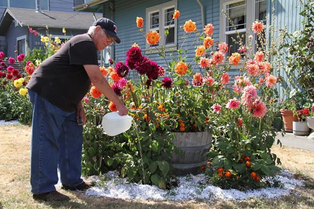 Rio Dell resident Bob Vogel waters his flowers using donated spring water. - PHOTO COURTESY CITY OF RIO DELL