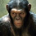 Do the Monkey!