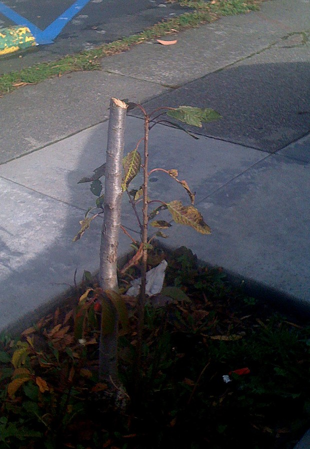 sad-tree.jpg