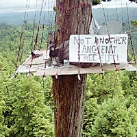 What Now, Treesitter? Scene from a treesit on Pacific Lumber Co. land. Photo courtesy of We Save Trees