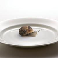Slow Food in High Gear