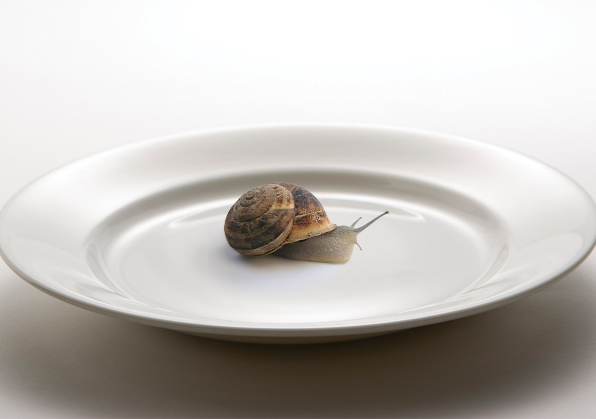Slow Food: The Humble Snail