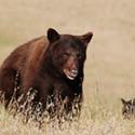 Bears Repeating