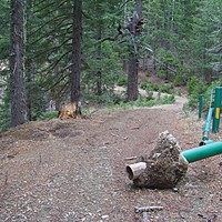 Tree Cop Somebody pulled out a Forest Service gate on the Lower Trinity Ranger District. Photo by Heidi Walters