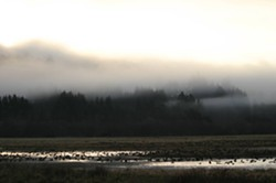sunrise_at_humboldt_bay_nwr_usfws_photo.jpg