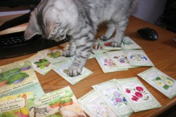 PHOTO BY GENEVIEVE SCHMIDT - Tamir playing with seed packets.