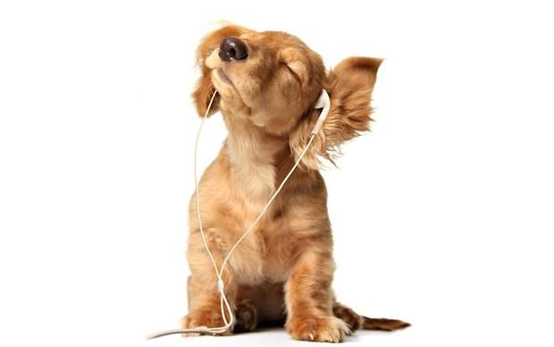 sounds4hounds.jpg