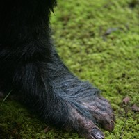Bigfoot Gets Real