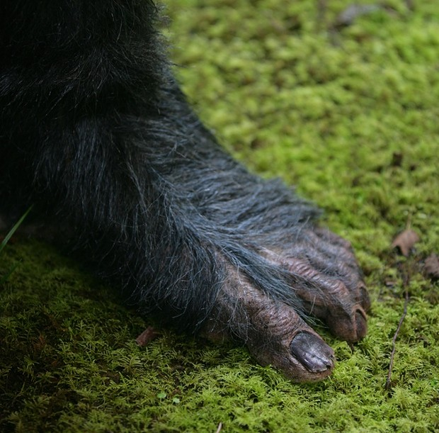 "That foot looks familiar ... - PHOTO COURTESY PATRICK MAGEE'S 'PRIMAL RAGE"" KICKSTARTER SITE"
