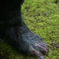 That foot looks familiar ...
