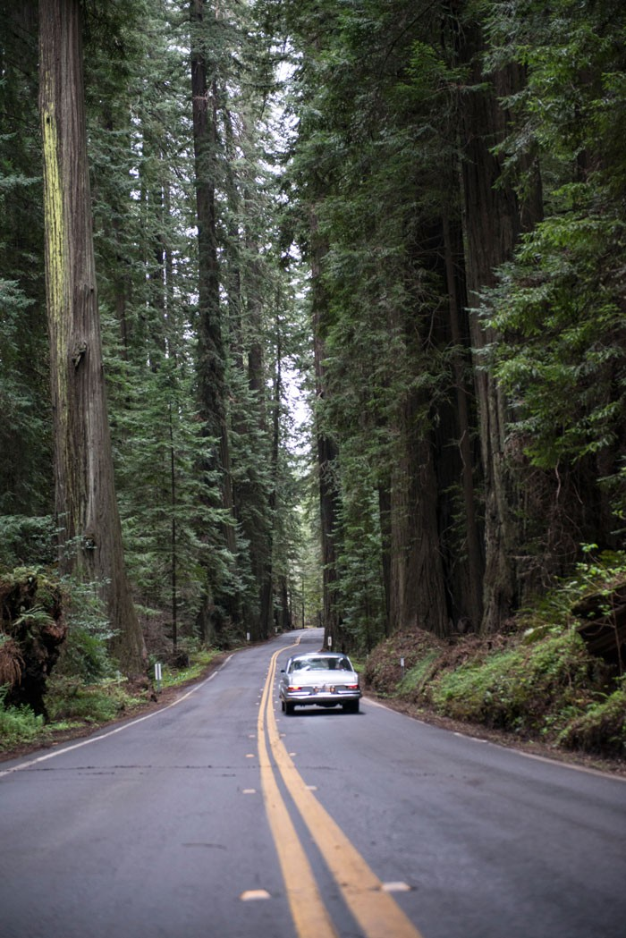 The Avenue of the Giants - WES SCHRECONGOST