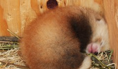 Win a Chance to Name the Baby Red Panda