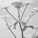 My Strange Plant Encounter