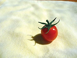 The straw bale tomato. Photo by Amy Stewart.