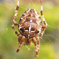 Spooky Bugs