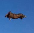 super-cat-flys.png