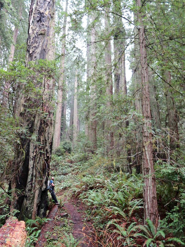 This loop trail through a virgin redwood grove starts at the Elk River Road parking lot.
