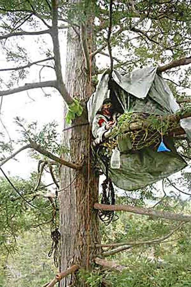 mckay-tract-tree-sitter-photo-courtesy-eearth-first-humboldt.jpg