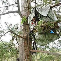 Tree-sitters Declare McKay Victory