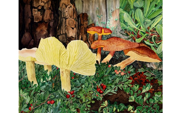 Tricholoma mushrooms with Bearberry - WATERCOLOR BY HORTENSE LANPHERE